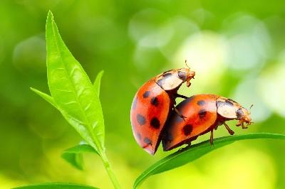 bug sex tmi 7-29-2014
