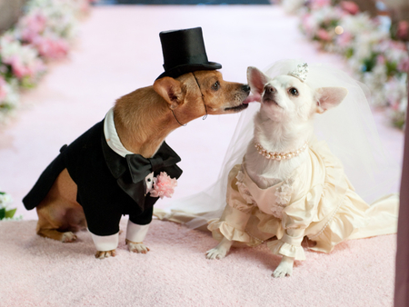 tmi dog-wedding