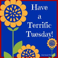 tmi terrific tuesday